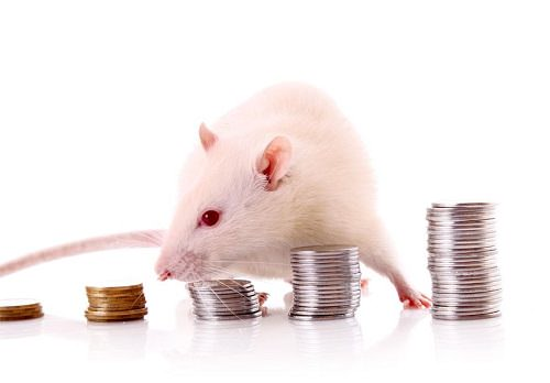 mouse and coins