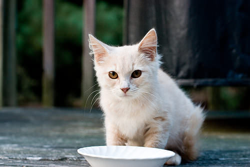 Most Dangerous People Foods for Cats