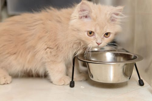 10 Most Dangerous People Foods for Cats