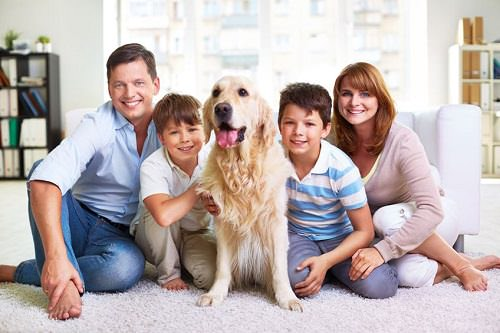 11 Family-Friendly Dog Breeds