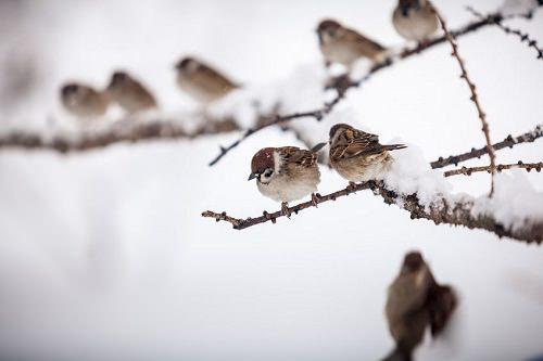 6 Ways to Help Animals Survive This Winter