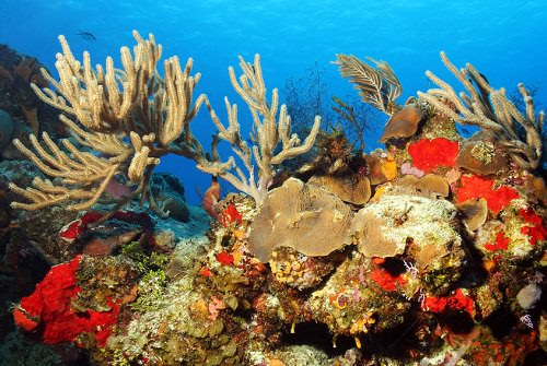 3 Best Caribbean Dive Sites