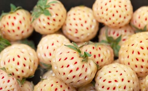Reasons to Munch on Pineberries