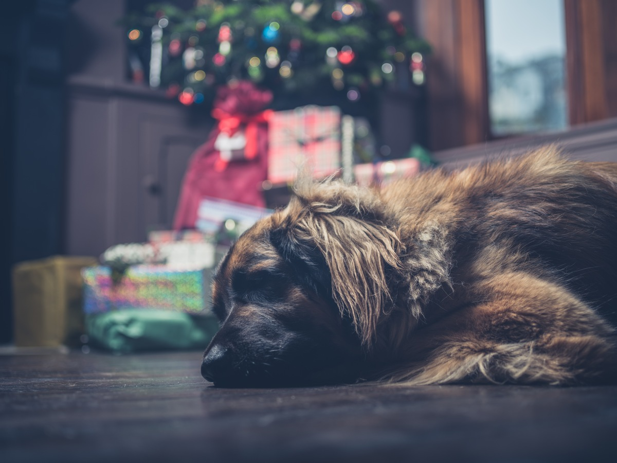 8 Popular Holiday Plants That Are Dangerous to Pets