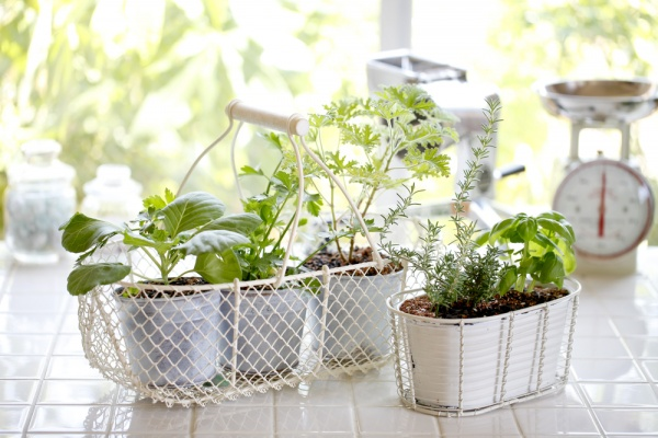 10 Herbs and Vegetables That You Can Regrow