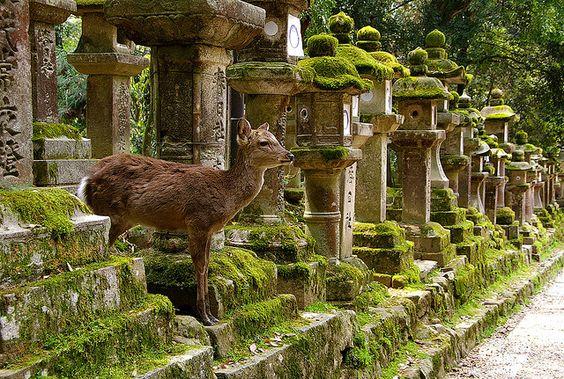 The Cradle of Deer: 5 Spectacular Reasons to Visit Nara City
