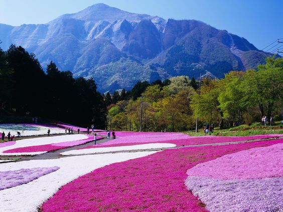 Captivating Botanical Gardens and Flowering Parks