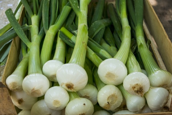 Go for Green Onions to Get These Health Benefits