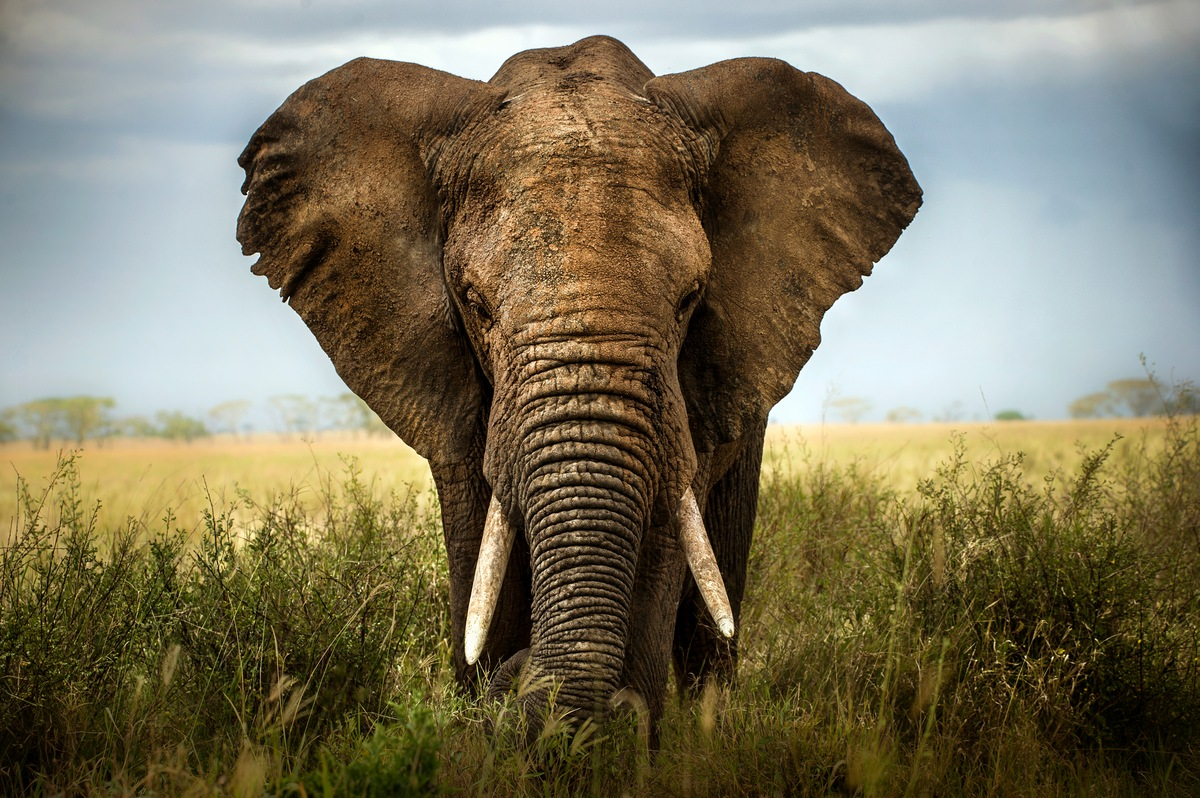 Social Lives 10 Facts about Elephants